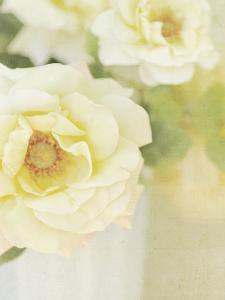 Candy Flowers IV by Shana Rae