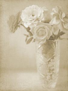 Soft Roses I by Shana Rae