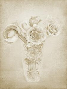 Soft Roses II by Shana Rae