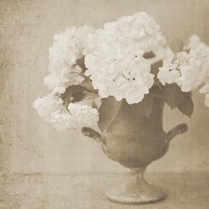 Vintage Hydrangeas by Shana Rae