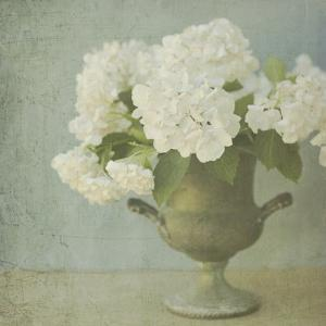 White Hydrangeas by Shana Rae