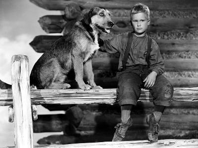 Shane, Brandon De Wilde, 1953--Photo