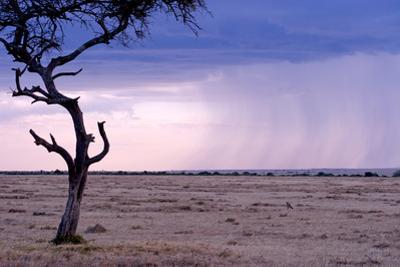 A Rain Storm Approaches a Lone Jackal in Masai Mara National Reserve