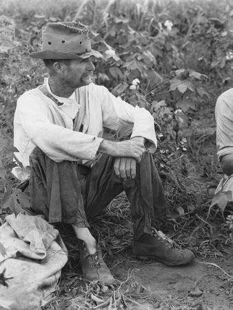 https://imgc.artprintimages.com/img/print/sharecropper-bud-fields-in-his-cotton-patch-in-hale-county-alabama-c-1936_u-l-q1by0rq0.jpg?p=0
