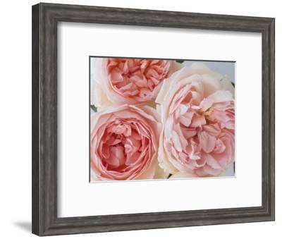 Sharifa Roses-Clay Perry-Framed Photographic Print