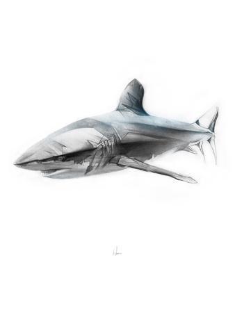 https://imgc.artprintimages.com/img/print/shark-1_u-l-pw4l9d0.jpg?p=0