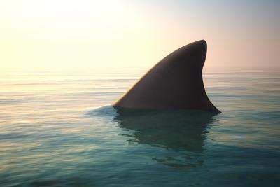 https://imgc.artprintimages.com/img/print/shark-fin-above-ocean-water_u-l-q1042l00.jpg?p=0