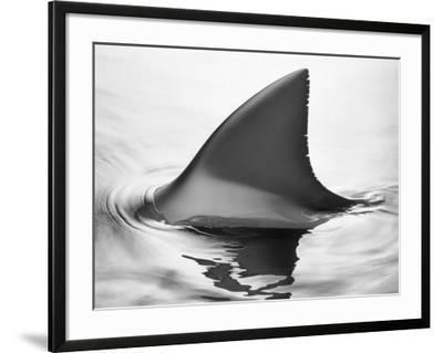 Shark Fin-Howard Sokol-Framed Photographic Print