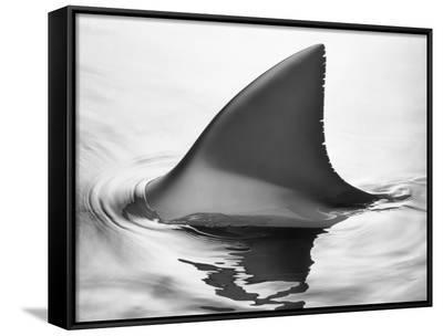 Shark Fin-Howard Sokol-Framed Canvas Print