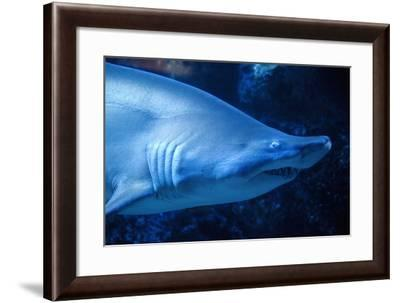 Shark-Karyn Millet-Framed Photographic Print