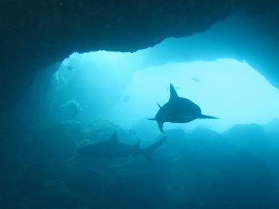 Sharks Circling in Cave-Chris Stankis-Photographic Print