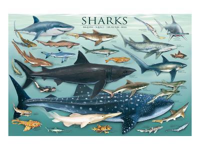 Sharks--Art Print
