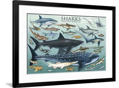 Sharks-Unknown-Framed Art Print