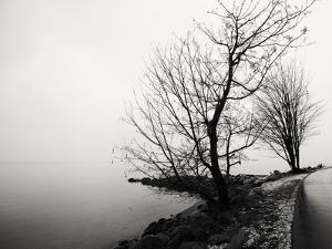 Bare Trees on a Lake Side Bank by Sharon Wish