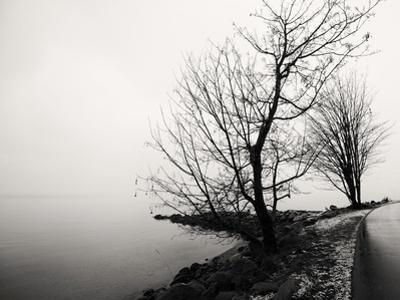 Bare Trees on a Lake Side Bank