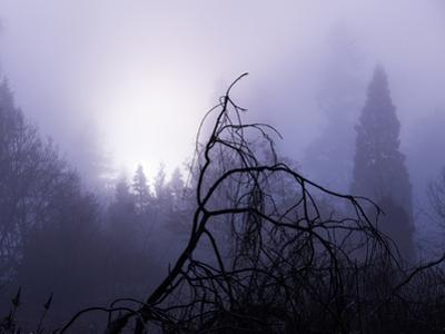 Foggy Day with Trees