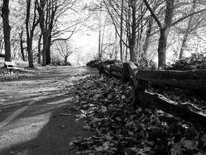 Road with Leaves on Ground by Sharon Wish