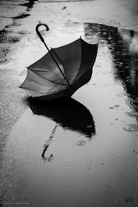 Umbrella in Puddle by Sharon Wish
