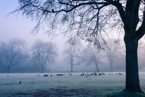 Winter Scene with a Flock of Birds Feeding on the Ground by Sharon Wish