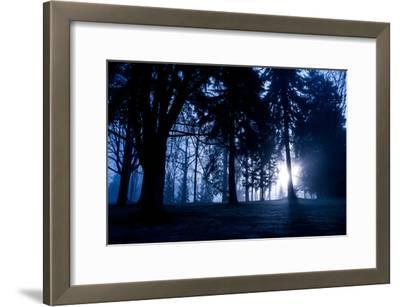 Winter Scene with Low Sunlight Shining Through Trees