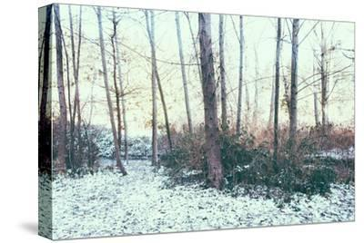 Winter Woodland Scene