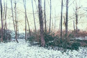 Winter Woodland Scene by Sharon Wish