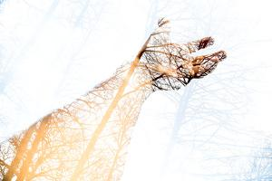 Double Exposure Arm and Hand by Sharpy Shooter