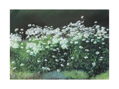 Shasta Daisies, 1992-Anthony Rule-Giclee Print