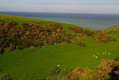 Sheep and the Rolling Hills to the Ocean, Otago, South Island, New Zealand, Pacific-Bhaskar Krishnamurthy-Photographic Print