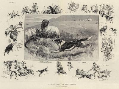 Sheep-Dog Trials in Westmoreland-John Charlton-Giclee Print
