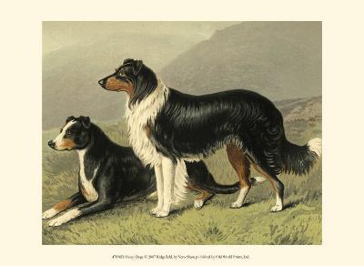 Sheep Dogs-Vero Shaw-Art Print
