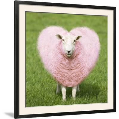 Sheep Ewe Pink Heart Shaped Wool--Framed Photographic Print