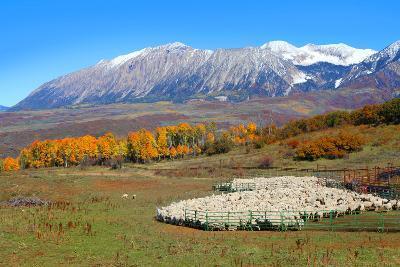 Sheep Farm near Kebler Pass in Colorado-SNEHITDESIGN-Photographic Print