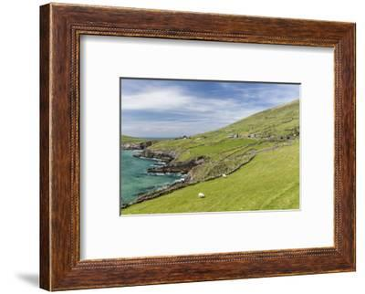 Sheep Fences and Rock Walls Along the Dingle Peninsula-Michael Nolan-Framed Photographic Print