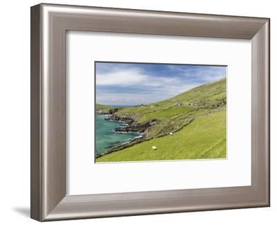 Sheep Fences and Rock Walls Along the Dingle Peninsula-Michael Nolan-Framed Photographic Print