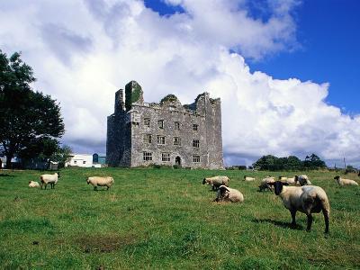 Sheep Grazing near Leamaneagh Castle-Richard Cummins-Photographic Print