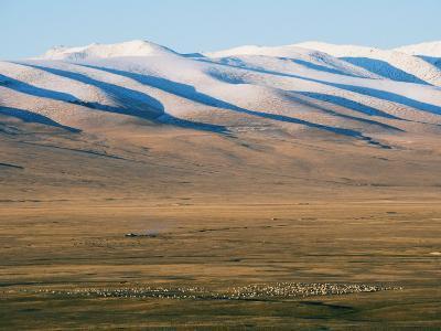 Sheep Grazing on the Plains in Bayanbulak, Xinjiang Province, China, Asia-Christian Kober-Photographic Print