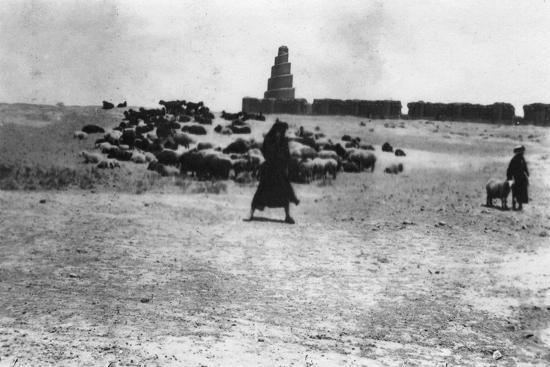 Sheep Grazing Outside Samarra, Mesopotamia, 1918--Giclee Print