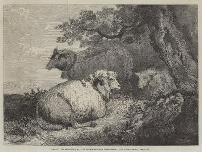 Sheep, in the International Exhibition--Giclee Print