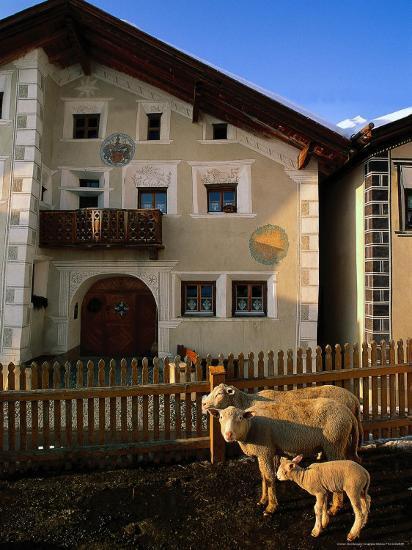 Sheep in Village, Graubunden, Switzerland-Walter Bibikow-Photographic Print