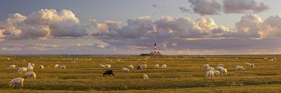 Sheep, Lighthouse of Westerhever (Municipality), Schleswig-Holstein, Germany-Rainer Mirau-Photographic Print