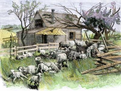 Sheep Near a Cottage in West Rutland, Vermont, c.1880--Giclee Print
