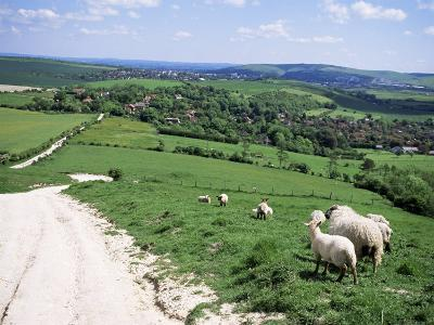 Sheep on the South Downs Near Lewes, East Sussex, England, United Kingdom-Jenny Pate-Photographic Print