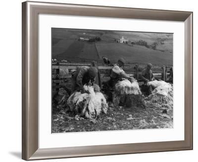 Sheep Shearing at Carbost, Isle of Skye, Scotland--Framed Photographic Print