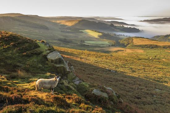 Sheep, valley with temperature inversion fog, Stanage Edge, Peak District Nat'l Park, England-Eleanor Scriven-Photographic Print