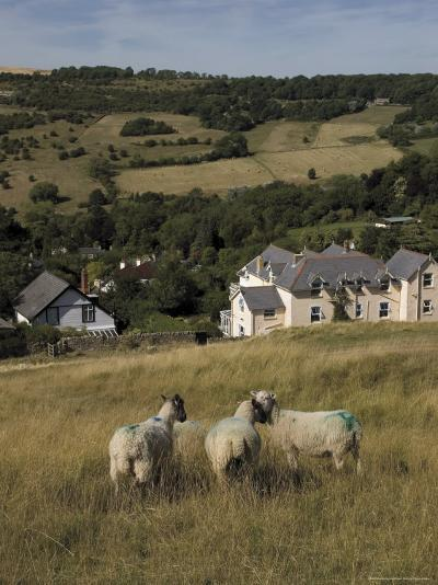 Sheep, Woodmancote Village Viewed from Cleeve Hill, the Cotswolds, Gloucestershire, England-David Hughes-Photographic Print