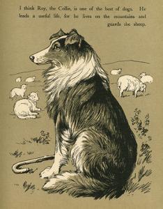 Sheepdog Guarding Flock of Sheep