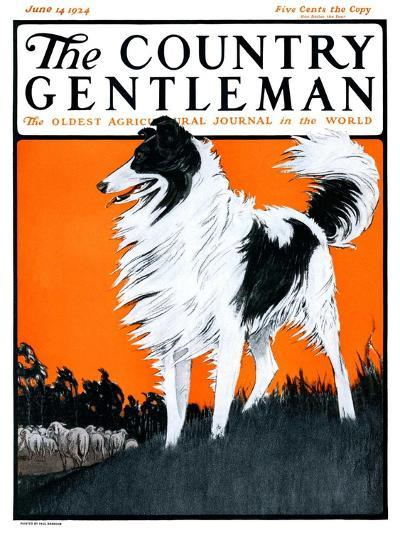 """Sheepdog Oversees Flock,"" Country Gentleman Cover, June 14, 1924-Paul Bransom-Giclee Print"