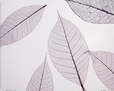 https://imgc.artprintimages.com/img/print/sheer-leaves-i_u-l-f8im1p0.jpg?p=0