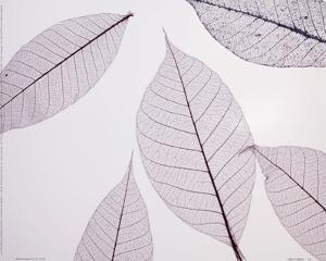Sheer Leaves I